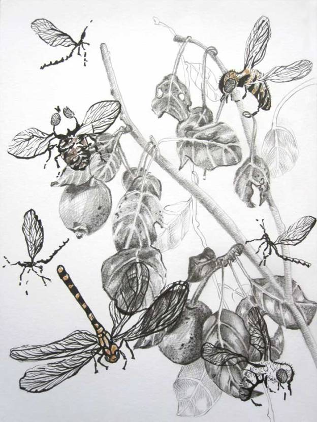 © Anita Salemink 2015.  Leaves and Insects Drawing  20 x 15 cm