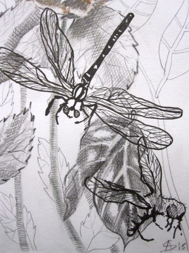 © Anita Salemink 2015.  Journal 14 september Drawing  20 x 15 cm (detail)