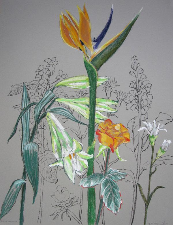 Bird of Paradise © Anita Salemink 2017, 65 x 50 cm